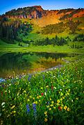 Summer wildflowers at Tipsoo Lake in Mount Rainier National Park