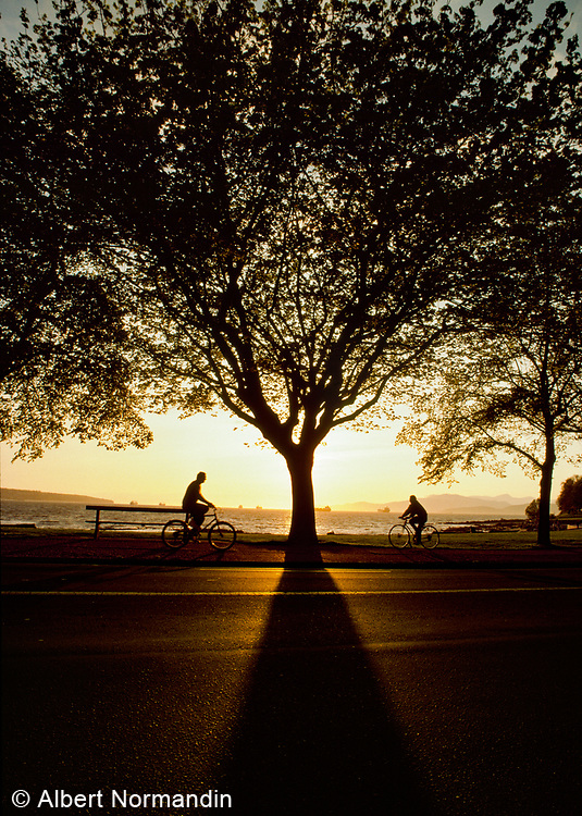 Stanley Park tree and bikes at sunset, Vancouver, British Columbia, Canada