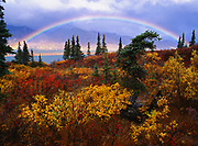 Autumn rainbow framing white spruces, willows, and dwarf birches along the shore of Lower Twin Lake, Lake Clark National Park, Alaska.