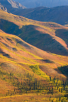 Tundra displaying its autumn colors, Ogilvie Mountains Tombstone Territorial Park Yukon Canada