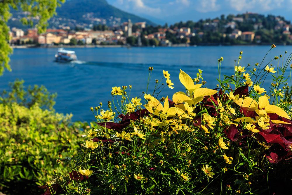 The impressive Isola Madre garden at Lago Di Maggiore, Italy.