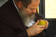 For any of the 4 species to be used for the religious ritual they must be up to speck. A rabbi is examining the Etrog to verify its quality