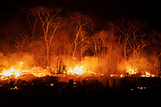 Fire burns the forest at Santa Tereza farm, in the Pantanal of Mato Grosso do Sul. <br /> In 2020 the Pantanal faced the largest destruction by burning in its history. From January to October, fires burned 4.200.000 hectares of the Pantanal, which corresponds to 28% of the entire biome, killing a vast amount of the region's wildlife.