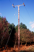 A5EXN6 Telegraph pole and phone lines in rural area Rendlesham forest Suffolk England