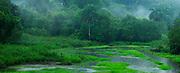 El ciervo perdido / Parque Nacional Camino de Cruces, Panamá.<br /> <br /> Panorámica de 2 fotografías.<br /> <br /> Edición de 10 | Víctor Santamaría.<br /> <br /> The lost deer / Camino de Cruces National Park, Panama.<br /> <br /> Panoramic image of 2 photographs.<br /> <br /> Edition of 10 | Víctor Santamaría.