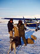 Lake Clark Air Service Pilot Mike Reynolds and gold miner Phil Barr bagging sled dogs for flilght in Cessna 206, Bonanza Hills strip, Alaska.