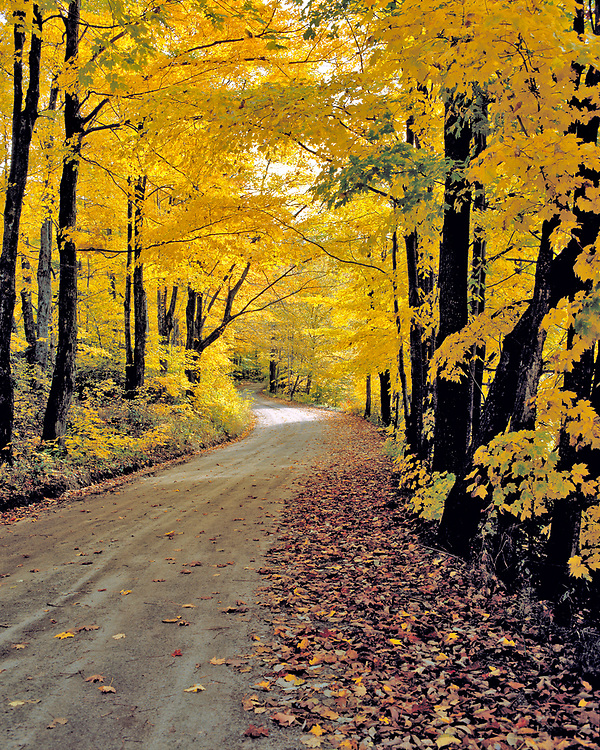 A road less traveled, in the Groton area of Vermont.