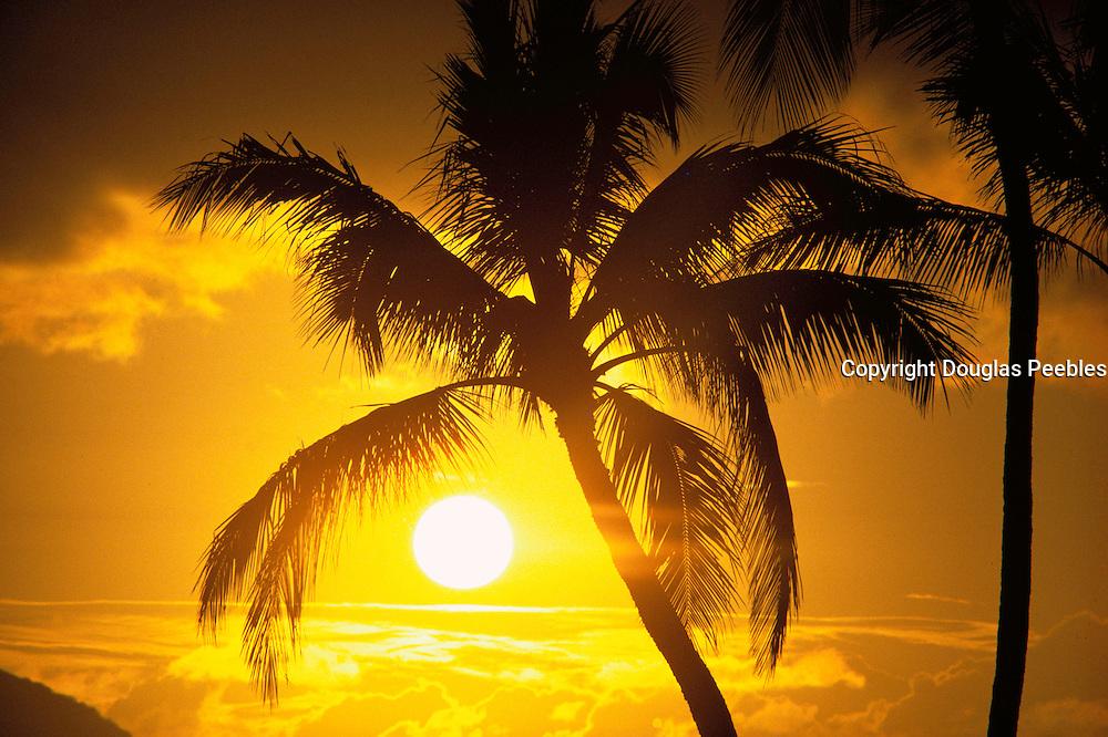 Sunset, Palm Tree<br />