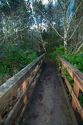 Leadbetter Point State Park, Long Beach, Washington, US