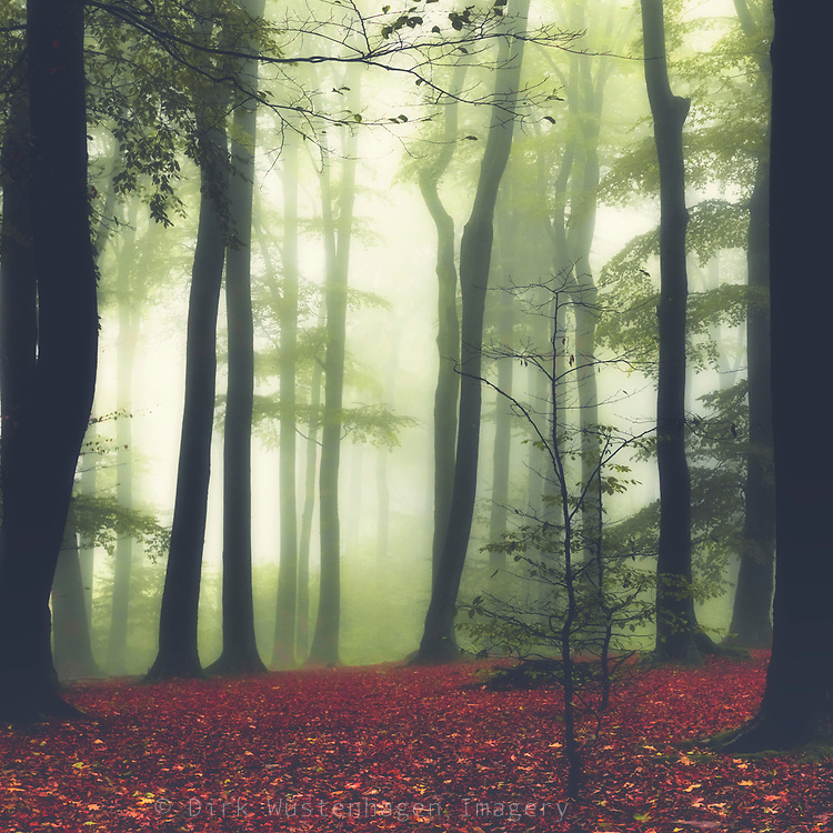 Forest clearing on a hazy fall morning<br /> --> Redbubble prints: https://rdbl.co/2NNDifj