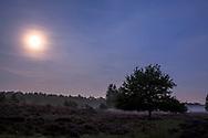 moon above the flowering common heather (Calluna vulgaris) in the Wahner Heath near Telegraphen hill, morning fog, Troisdorf, North Rhine-Westphalia, Germany.<br /> <br /> Mond ueber der bluehenden Besenheide (Calluna vulgaris),  in der Wahner Heide nahe Telegraphenberg, Morgennebel, Troisdorf, Nordrhein-Westfalen, Deutschland.