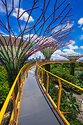 The Supertree Grove from the OCBC Skyway at Gardens by the Bay, Singapore, Republic of Singapore