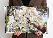 Self published photobook, 2011.