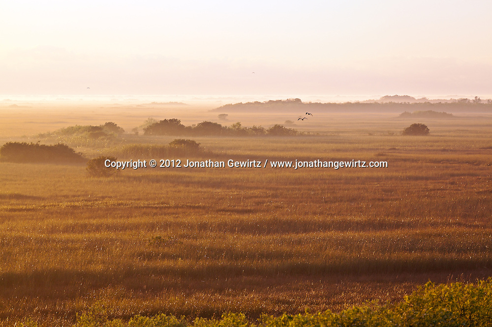 Birds fly above the ground fog at sunrise on the sawgrass prairie in the Shark Valley section of Everglades National Park, Florida. WATERMARKS WILL NOT APPEAR ON PRINTS OR LICENSED IMAGES.<br /> <br /> Licensing: https://tandemstock.com/assets/43327249