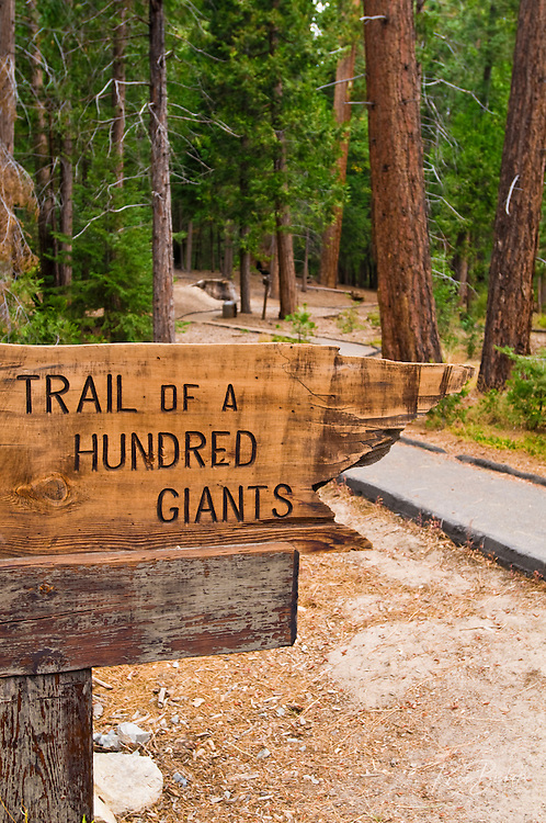 Trail of a Hundred Giants, Giant Sequoia National Monument, Sierra Nevada Mountains, California