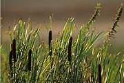Bolsa Chica Wetlands in Huntington Beach