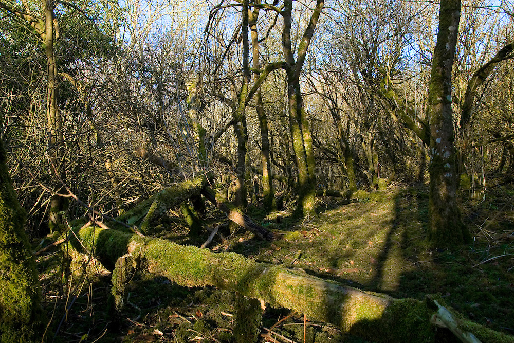 The Woods at Rath Lugh, near Skryne or Skreen Co. Meath. These woods on the the esker and beside the promontory fort of Rath Lugh that are currently being threatened by the construction of the M3 motorway between Dublin and Navan...