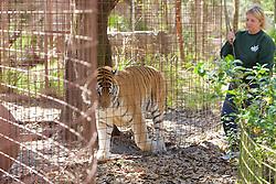 Staff & Tiger, Big Cat Rescue