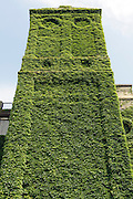 ruin building with tower overgrown with green vines
