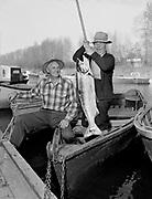 Y-510406-01.  starting out salmon fishing season, Oregon City, April 6, 1951