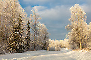 Hoarfrost covered  trees line snow covered road in Southcentral Alaska. Winter. Morning.