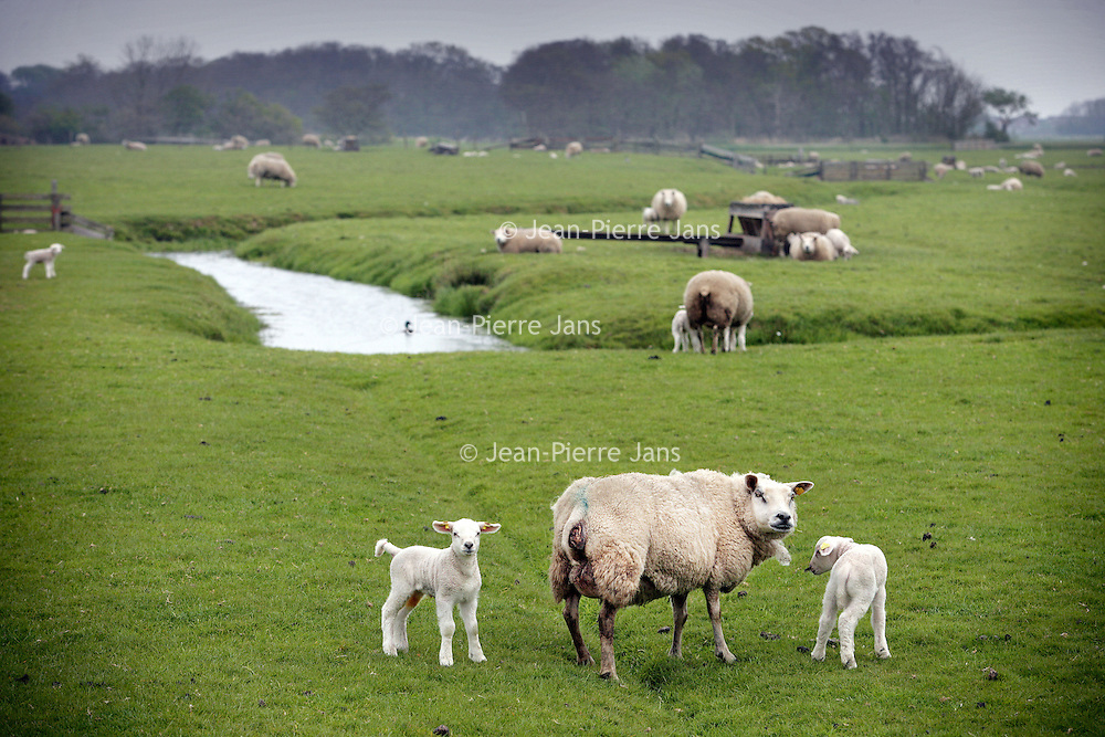 Nederland, Texel,16 mei 2007..Schapenboer Piet Bakker met 1 van zijn Texelse lammeren op zijn schapenboerderij...Foto:Jean-Pierre Jans