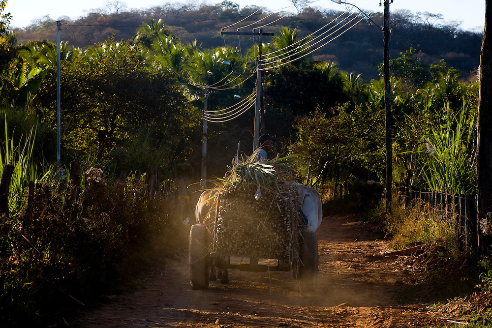 Januaria_MG, Brasil.<br /> <br /> Usina de alcool em Januaria, Minas Gerais.<br /> <br /> Man carrying sugar cane into a chariots.<br /> <br /> Foto: LEO DRUMOND /  NITRO