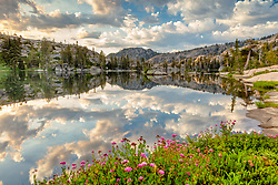 """""""Wildflowers at Paradise Lake 2"""" - Photograph of wildflowers and puffy clouds in the early morning at Paradise Lake."""