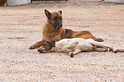 Dogs in the court yard. Herdade da Malhadinha Nova, Alentejo, Portugal