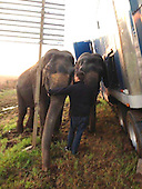 Two ELEPHANTS stop 18 wheeler from tipping off side of Louisiana highway