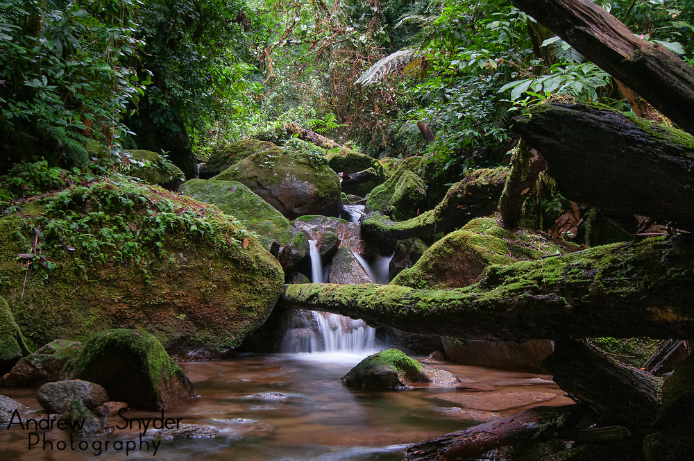Cusuco National Park's habitats are vital to the persistence of many threatened species. Some frogs and salamanders are found nowhere else in the world but within the park boundaries.