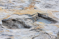 Dinosaur tracks at the Clayton Dinosaur Trackway.  There are at least 4 different kinds of dinosaur tracks in these trackways, including plant eaters and meat eaters.  Clayton Lake State Park, New Mexico.