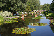 Lake with water lillies, Park Planten un Blomen, Hamburg, Germany.