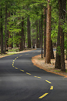 Forest road California