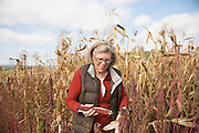 Carol Boutard in a field of Roy Calais flint corn