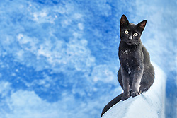 Black cat and blue wall, Chefchaouen, Morocco