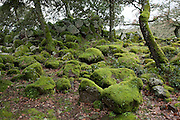 An ancient nuraghe stone tower lies ruined amidst moss and trees in the Parco della Giara near Tuili, Sardinia