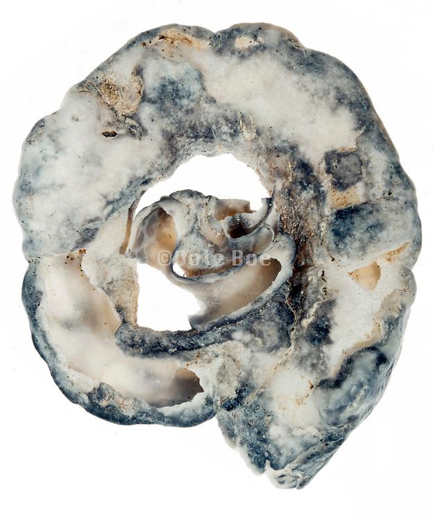 broken seashell piece