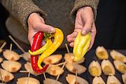 PEPPER (SWEET), Capsicum annuum Showcase: 'Romani' and 'Yellow Nardello'<br />Breeder: Anne Berblinger, Gales Meadow Farm Chef: Kristen Murray, Maurice<br />Dish 1: Jimmy nardello + Apple pate de fruit Dish 2: Brandade stuffed pepper