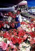 Anthuriums, Hilo Open Market, Hilo, Island of Hawaii<br />