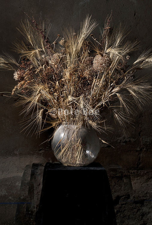 dried brown colored various wild plants and wheat bouquet still life