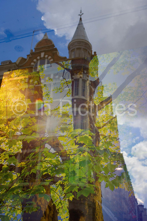 Tall central Covent Garden area London architecture and illustration of tree in a forest. Looking through the window of an outdoor sports shop in Southampton Street, central London, we see a hanging screen featuring the great outdoors - high branches and trunk of a maple in full leaf. In the background is the corner of a Victorian property, its turret with a coned top echoing the trunk and shape of the tree.