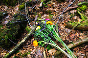 Flowers lie at the base of a tree in Aokigahara Jukai, better known as the Mt. Fuji suicide forest, which is located at the base of Japan's famed mountain west of Tokyo, Japan.