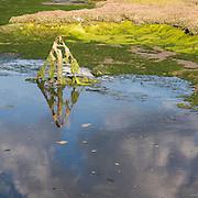 Bunny Meadows mudflats, River Hamble, Hampshire.