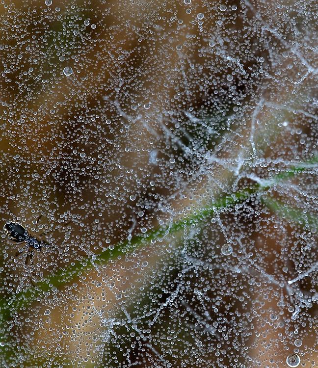 Dewy Ground Web