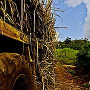 A truck laden with freshly harvested sugarcane negotiates the final stretch of the road to the village of Soba in Nandi County. Most of the people who live here are engaged with farming and sugarcane is their main crop. Rift Valley Province, Kenya.