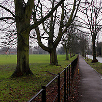 Europe, UK, England, Hertfordshire, Bushey. The Avenue in winter.