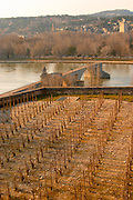 The Pont Saint St Benezet bridge in Avignon on the Rhone river and a vineyard seen from the garden of the Pope's Palace, Vaucluse, Rhone, Provence, France