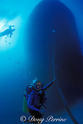 divers descend on the wreck of the freighter Proteus --<br /> a 220 foot artificial reef sunk in the Key Biscayne Artificial Reef Site on January 24, 1985,Miami, Florida ( Western Atlantic Ocean ) MR 36