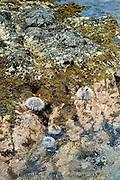 Zee-egels, Curaçao 2014 - Sea urchin, Curaçao, 2014
